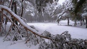 Κορμός ενός δέντρου πεύκων στο δάσος που καλύπτεται με το χιόνι το χειμώνα κατά τη διάρκεια χιονοπτώσεων κίνηση αργή φιλμ μικρού μήκους