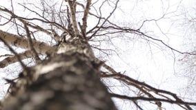 Κορμός και κορώνα δέντρων την άνοιξη στο πάρκο απόθεμα βίντεο