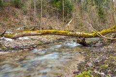 Κορμός με την ανάπτυξη των εγκαταστάσεων πέρα από το μικρό ποταμό στο δάσος στοκ φωτογραφίες με δικαίωμα ελεύθερης χρήσης