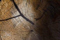 Κορμός στα ιταλικά ξύλα στοκ φωτογραφία με δικαίωμα ελεύθερης χρήσης
