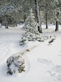 Κορμός στο χιόνι Στοκ Φωτογραφίες