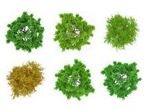 Κορυφές δέντρων που απομονώνονται στοκ εικόνες