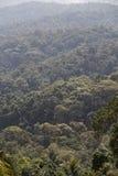 Κορυφές δέντρων Στοκ Εικόνες