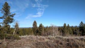 Κορυφές δέντρων Στοκ φωτογραφίες με δικαίωμα ελεύθερης χρήσης