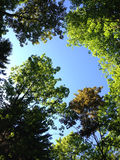 Κορυφές δέντρων Στοκ εικόνα με δικαίωμα ελεύθερης χρήσης