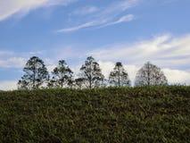 Κορυφές δέντρων Στοκ φωτογραφία με δικαίωμα ελεύθερης χρήσης