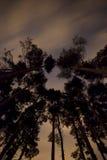 Κορυφές δέντρων τη νύχτα Στοκ εικόνα με δικαίωμα ελεύθερης χρήσης