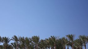 Κορυφές του κυματισμού φοινίκων από τον αέρα στο πετώντας αεροπλάνο ουρανού απόθεμα βίντεο
