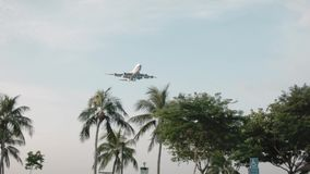 Κορυφές του κυματισμού φοινίκων από τον αέρα στο πετώντας αεροπλάνο ουρανού πλάνο Αεροπλάνο που πετά πέρα από το σαφείς μπλε ουρα απόθεμα βίντεο