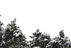 Κορυφές των κομψών δέντρων στο χιόνι Στοκ φωτογραφία με δικαίωμα ελεύθερης χρήσης