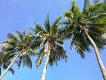 Κορυφές των φοινίκων ενάντια στο μπλε ουρανό στοκ εικόνες