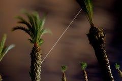 Κορυφές φοινίκων στο νυχτερινό ουρανό στοκ φωτογραφία με δικαίωμα ελεύθερης χρήσης