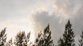 Κορυφή δέντρων πεύκων που κινείται στον αέρα απόθεμα βίντεο