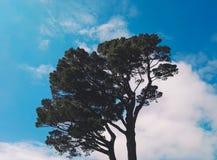 Κορυφή ενός δέντρου σε μια ηλιόλουστη ημέρα στους κήπους Bodnant στοκ εικόνες