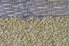 Κορυφή σπόρου ρυζιού Στοκ εικόνες με δικαίωμα ελεύθερης χρήσης