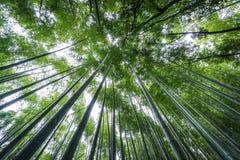 Κορυφή του άλσους μπαμπού Arashiyama του Κιότο, Ιαπωνία Στοκ εικόνες με δικαίωμα ελεύθερης χρήσης