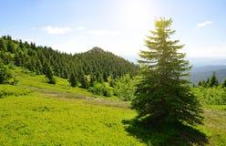 Κορυφή του βουνού Grosser Arber, Γερμανία Στοκ εικόνα με δικαίωμα ελεύθερης χρήσης