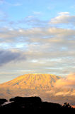 Κορυφή του βουνού kilimanjaro στην ανατολή Στοκ Εικόνα