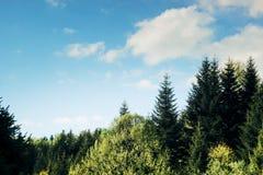 Κορυφή του δάσους δέντρων στα βουνά σε ένα υπόβαθρο των σύννεφων και του s Στοκ εικόνα με δικαίωμα ελεύθερης χρήσης