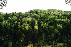 Κορυφή του δάσους δέντρων στα βουνά σε ένα υπόβαθρο των σύννεφων και του s Στοκ Εικόνες