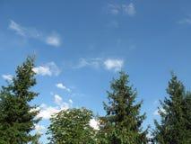Κορυφή των πράσινων πεύκων Στοκ Φωτογραφίες