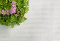 κορυφαία όψη λουλουδιώ& Στοκ Εικόνα