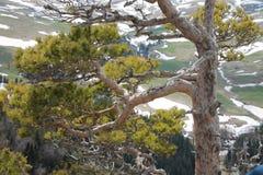 κορυφαία όψη Στοκ φωτογραφία με δικαίωμα ελεύθερης χρήσης