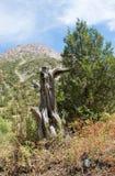 κορυφαίο δέντρο βουνών Στοκ εικόνα με δικαίωμα ελεύθερης χρήσης