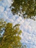 κορυφαίο δέντρο στοκ εικόνες με δικαίωμα ελεύθερης χρήσης