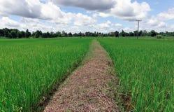 Κορυφογραμμή τομέων ρυζιού στοκ φωτογραφία με δικαίωμα ελεύθερης χρήσης