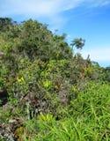 Κορυφογραμμή SAN Lorenzo  Επιφύλαξη πουλιών Ελ Ντοράντο, οροσειρά Νεβάδα, Santa στοκ εικόνες