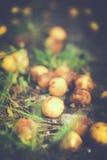 Κορόμηλο - φρούτα Στοκ Εικόνες