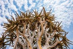 Κορώνα δέντρων ρίγου στοκ εικόνες με δικαίωμα ελεύθερης χρήσης