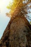 Κορώνα δέντρων στις ακτίνες του ήλιου ρύθμισης Στοκ εικόνα με δικαίωμα ελεύθερης χρήσης