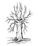 κορώνα και κορμός ενός δέντρου χωρίς φύλλα διανυσματική απεικόνιση