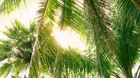 Κορώνες των πράσινων φοινίκων στη ζούγκλα με το φωτεινούς ήλιο και τις ακτίνες απογεύματος 4K απόθεμα βίντεο
