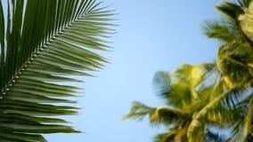 Κορώνες φοινίκων καρύδων ενάντια στην μπλε ηλιόλουστη άποψη προοπτικής ουρανού από το έδαφος φιλμ μικρού μήκους