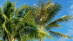 Κορώνες φοινίκων καρύδων ενάντια στον εξωτικό μπλε ουρανό στοκ εικόνα με δικαίωμα ελεύθερης χρήσης