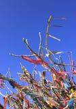 Κορδέλλες και απορρίματα στο δέντρο 3 στοκ φωτογραφία με δικαίωμα ελεύθερης χρήσης