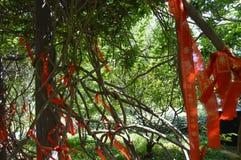 Κορδέλλες παραδοσιακού κινέζικου Στοκ Εικόνες