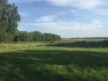 Κοσμεί το καλοκαίρι δέντρων τοπίων φύσης Στοκ Εικόνα