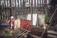 Κοτόπουλα προσοχής παιδιών Curiuos στο αγροτικό σπίτι πουλερικών στην αυλή επαρχίας κατά τη διάρκεια των καλοκαιρινών διακοπών Στοκ Εικόνα