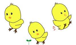 κοτόπουλο μωρών Στοκ Εικόνες