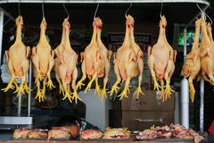 κοτόπουλο που μαδιέται Στοκ Εικόνες
