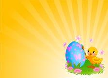 Κοτόπουλο που χρωματίζει την ανασκόπηση αυγών Πάσχας Στοκ Φωτογραφία
