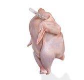 κοτόπουλο που ψαλιδίζει το απομονωμένο θερμόμετρο μονοπατιών Στοκ Φωτογραφίες
