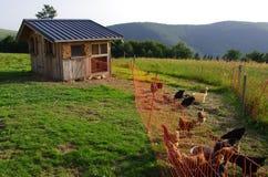 Κοτόπουλα στο αγρόκτημα Στοκ φωτογραφία με δικαίωμα ελεύθερης χρήσης
