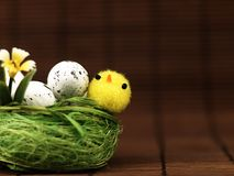 Κοτόπουλο και αυγά Πάσχας στη φωλιά Στοκ Εικόνα