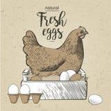 Κοτόπουλο και αυγά Στοκ Εικόνες