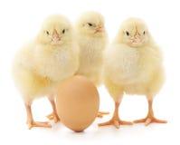 Κοτόπουλο και αυγό Στοκ φωτογραφία με δικαίωμα ελεύθερης χρήσης
